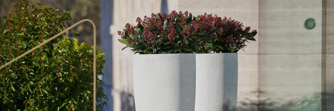 hauser-design-eternit-betongefäss-geisha-hell-und-hoch