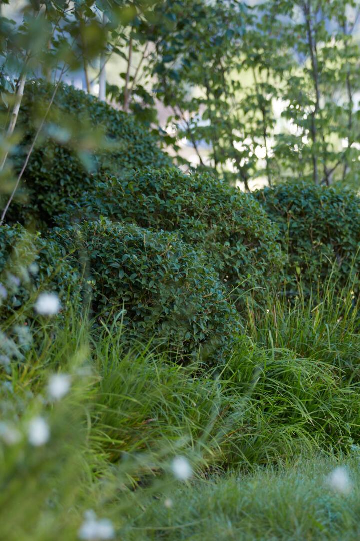 Ein englischer Garten