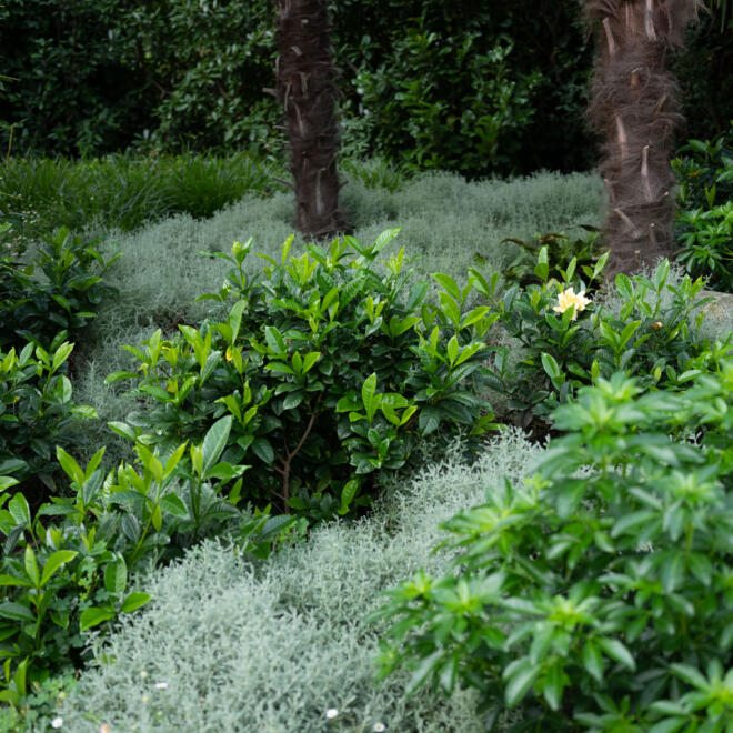 hauser-design-referenz-im-tessin-mit-viel-einheimischem-grün