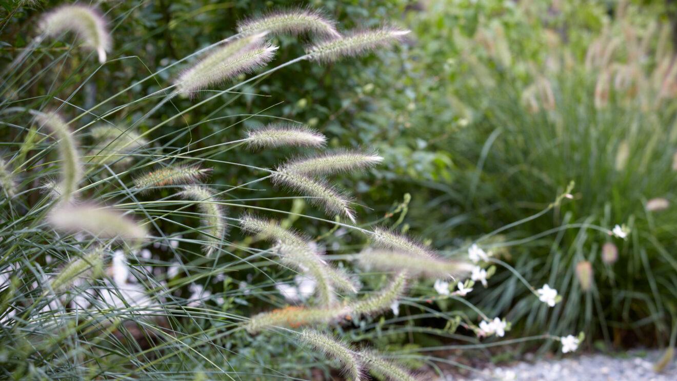 hauser-design-staudenbeet-gräser