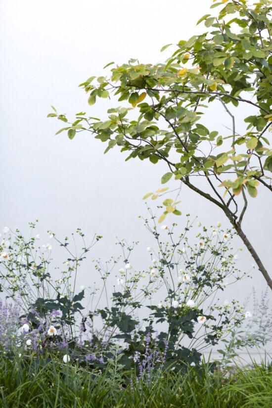 hauser-design-staudenbeet-lila-und-weiss-neben-Baum