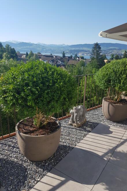 hauser-design-terrasse-mit-aufgeschnittenem-Buchs