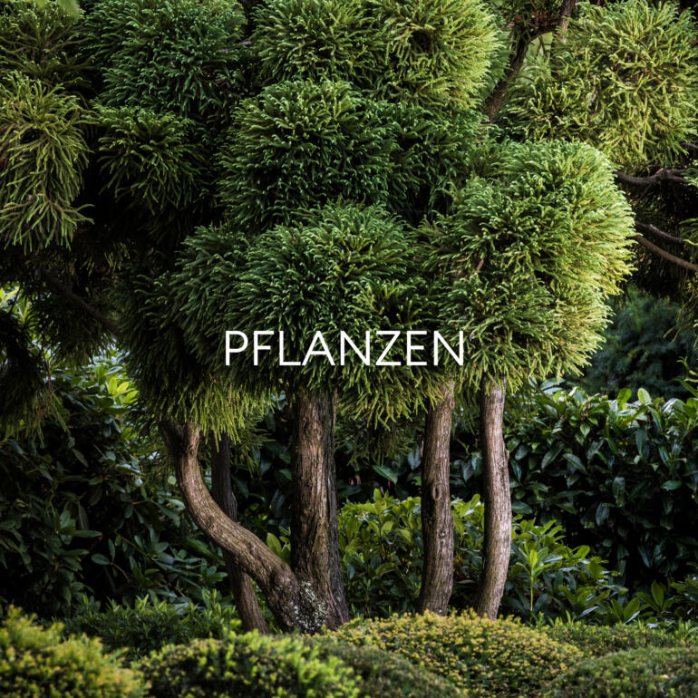 Hauser Design Sortiment Pflanzen