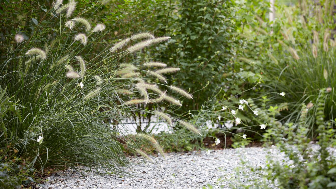 hauser-design-referenz-EFH-Ziergräser-verspielt-gepflanzt-am-wegrand