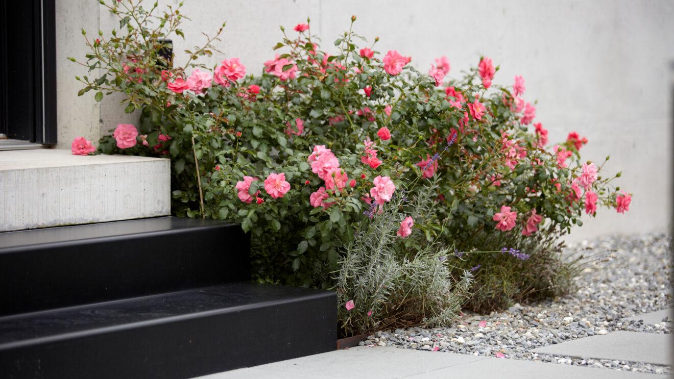 hauser-design-referenz-EFH-rosen-und-lavendel