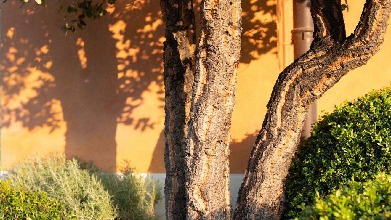 hauser-design-referenz-im-tessin-solitärbaum